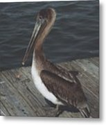 Brown Pelican On Pier 2 Metal Print