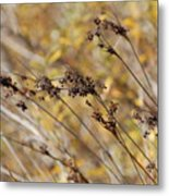 Brown Wildgrass Metal Print