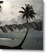 Buca Bay, Laundry And Palm Trees Metal Print by James L. Stanfield