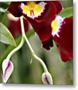 Buds And Blooms Orchid Metal Print