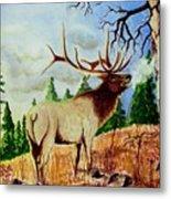 Bugling Elk Metal Print