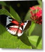 Butterfly-5 Metal Print