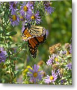 Butterfly And Blue Metal Print