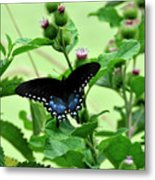 Butterfly And Mossy Pond Metal Print