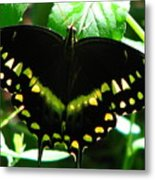 Butterfly Art 3 Metal Print
