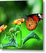 Butterfly Metal Print by Chaza Abou El Khair