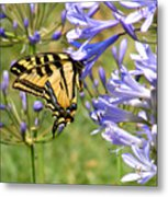 Butterfly In Blue Metal Print