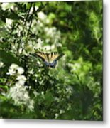 Butterfly In Muted Green Background Metal Print