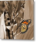 Butterfly In Sepia Metal Print