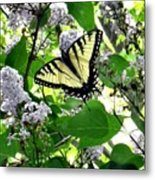 Butterfly In The Lilac No. 1 Metal Print