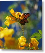 Butterfly Pollinating Flowers  Metal Print