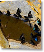 Butterfly Pool Metal Print