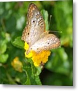 Butterflywith Dots Metal Print