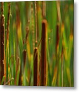 By The Lagoon Metal Print