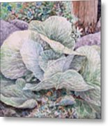 Cabbage Head Metal Print