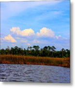 Cabbage Palms And Salt Marsh Grasses Of The Waccasassa Preserve Metal Print