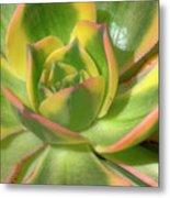 Cactus 4 Metal Print
