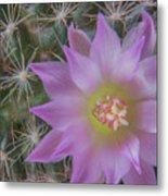 Cactus Flower #2 Metal Print