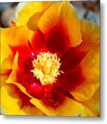 Cactus Flower V Metal Print