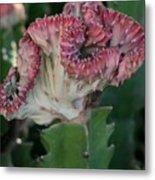 Cactus In Bloom Metal Print