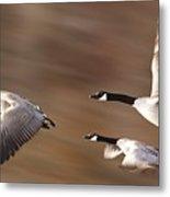 Canada Geese In Flight Metal Print