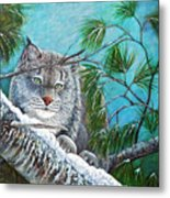Canadian Lynx Metal Print