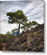 Canary Pines Nr1 Metal Print