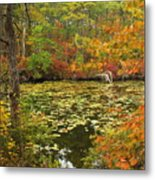 Cape Cod Kettle Pond Foliage Metal Print