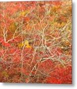 Cape Cod National Seashore Dwarf Beech Foliage Metal Print