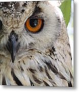 Cape Eagle-owl Metal Print
