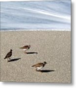 Captiva Brids Metal Print