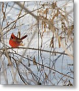 Cardinal In Winter 2 Metal Print