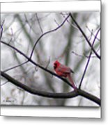 Cardinal Perched On A Branch Metal Print