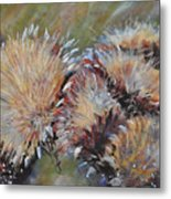 Cardoon  Metal Print
