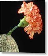 Carnation Metal Print