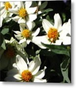 Cascade Of White Flowers Metal Print