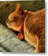 Cat Dream Metal Print