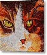 Cat Eye Metal Print by Shahid Muqaddim