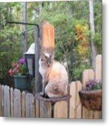 Cat In A Birdbath Metal Print