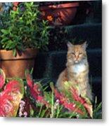 Cat Postcard Metal Print