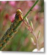 Caterpillar Munching Metal Print