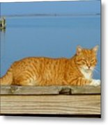 Cats 29 Metal Print by Joyce StJames