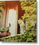 Cats Eye View Metal Print