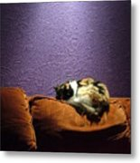 Cats Sleep In Odd Places Metal Print
