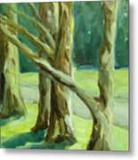Cedars In Woodward Park Metal Print
