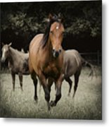 Charlie And Friends Metal Print by Jana Goode