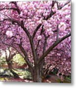 Cherry Blossom Wonder Metal Print