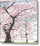 Cherry Trees Metal Print by Patrick Grills