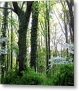 Chesapeake Oldgrowth Forest Metal Print