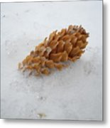Chilly Pine Cone In Snow Metal Print